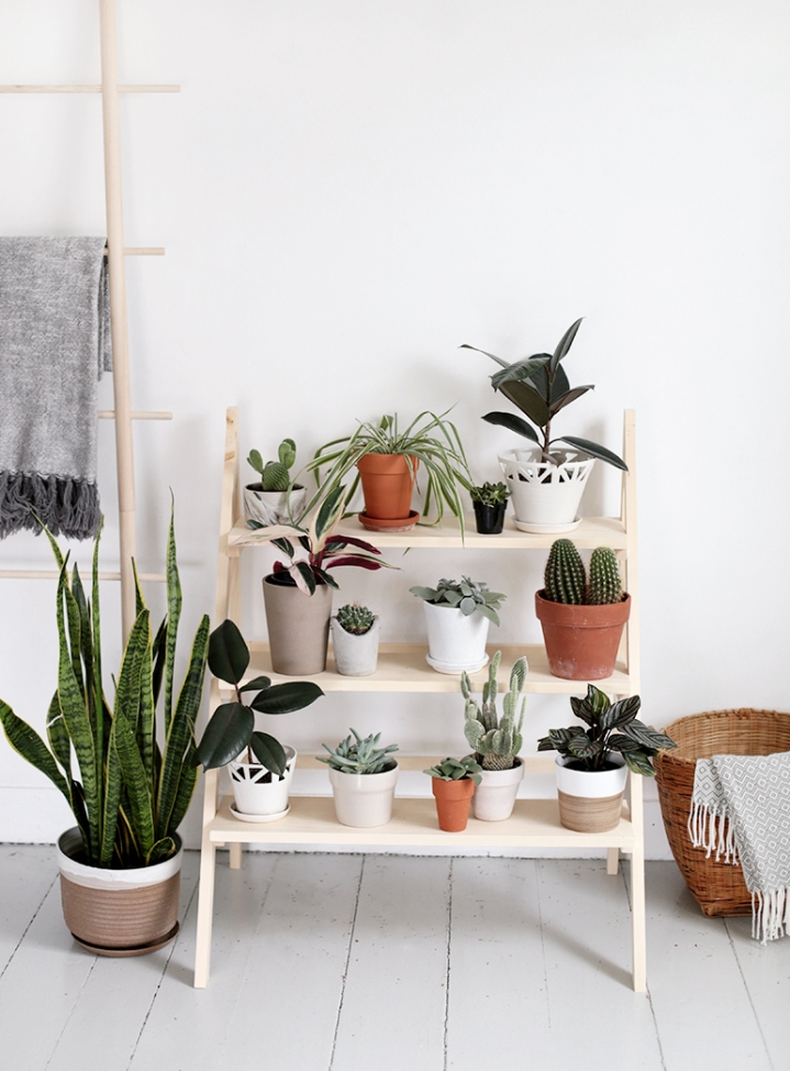 ladderplant-1